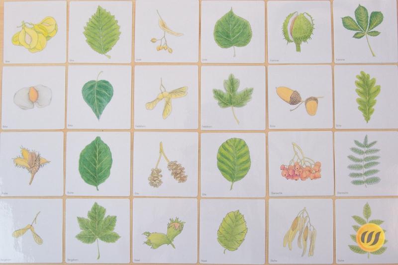 Und bäumen blätter früchte von Blätter bestimmen: